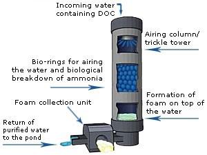 Clarity Protein Skimmer